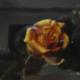 "W29 – ""Rose"" 29×24 I Öl auf Leinwand (2001)"